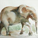 Acuarela Elefante