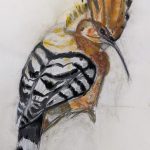 Pájaro Mariana Aranguren Técnica: Boceto en papel Tamaño: 30x 42 cm